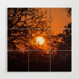 Sultry sun setting behind the sausage tree Wood Wall Art