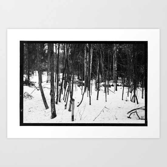 NORWEGIAN FOREST IX Art Print