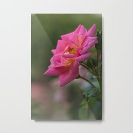Rose in the Garden, Natural Style Metal Print