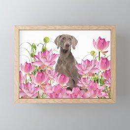Weimaraner Lotos Flowers Framed Mini Art Print