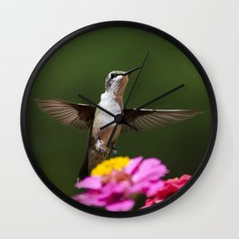 Hummingbird VI Wall Clock