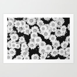 The Daisy Garden (Black and White) Art Print