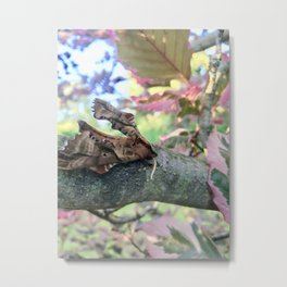 Springtime Moth Metal Print