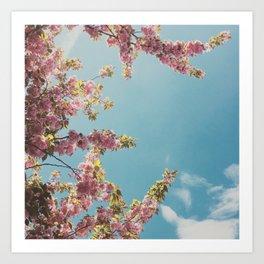 Cherry Blossom Delight Art Print