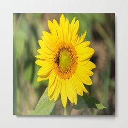 Field of Sunflower-5 Metal Print