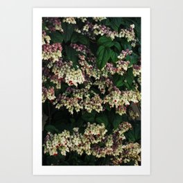 Bagflower Art Print