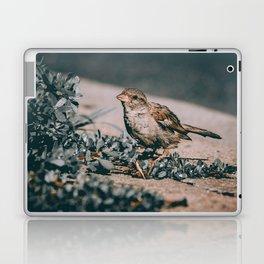 Summer Sparrow. Bird Photograph Laptop & iPad Skin