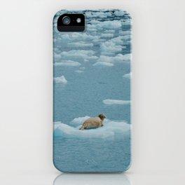 Sea lion on iceberg iPhone Case