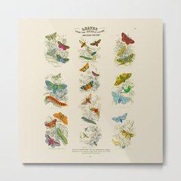 Vintage British Moths Metal Print