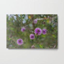 California bees pollinating native flowers Metal Print