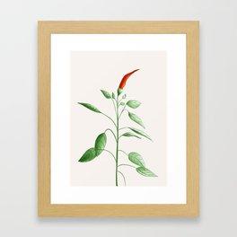 Little Hot Chili Pepper Plant Framed Art Print