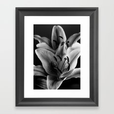 A Portrait of a Lily Framed Art Print