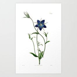 Pollini's Bell Flower / W. Curtis 1857 Art Print