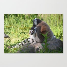 lemur eyes Canvas Print