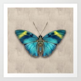 The Widespread Forester Butterfly Art Print