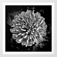 Red Clover in Black and White II Art Print
