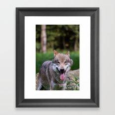 Canis Lupus Lupus III Framed Art Print