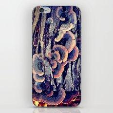 Wood Mushrooms iPhone & iPod Skin
