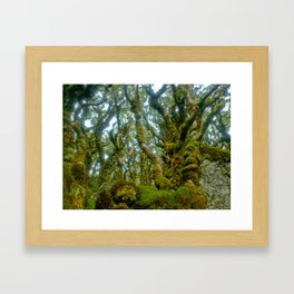 Trees Routeburn Trek, New Zealand Framed Art Print