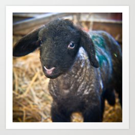 Little Lamb. Art Print