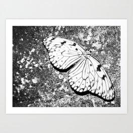 Dead Butterfly Hold Pure Beauty  Art Print