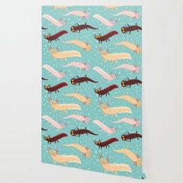 pattern Cute orange pink brown Axolotl Cartoon character on blue background in the aquarium Wallpaper