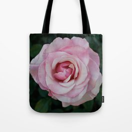 A rose from the mission gardens Tote Bag