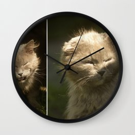 Gray cat walks on a green grass Wall Clock