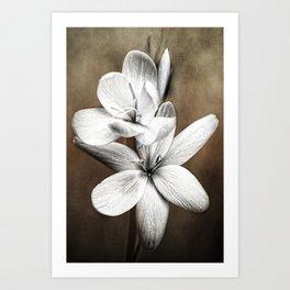 Quiet Beauty 2 Art Print