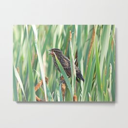 Cattails and the Bird Metal Print