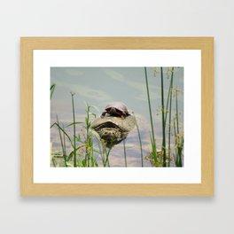 Turtleback Ride Framed Art Print