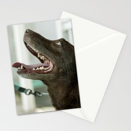 Wet Dog Stationery Cards