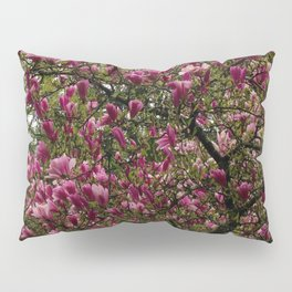 Magnolia Tree 2 Pillow Sham