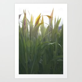 The Corns. Art Print