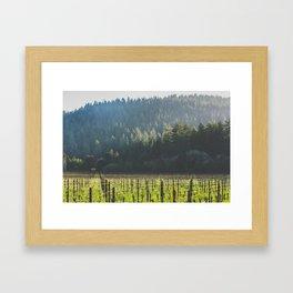 Anderson Valley Vineyard #3 Framed Art Print