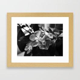 Simple Elegance Framed Art Print