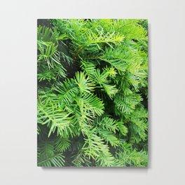 Green pine Metal Print