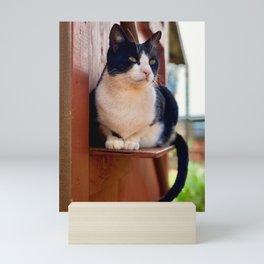 Watcher Cat (Lanai Cat Sanctuary) Mini Art Print