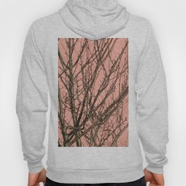 Bare tree against a pink wall Hoody