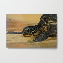 Tranquil Turtle Metal Print