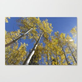 Looking Up Aspens Canvas Print