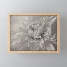 Monochrome chrysanthemum close-up Framed Mini Art Print