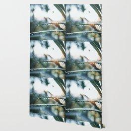 morning dewdrops Wallpaper