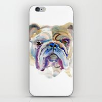 bulldog iPhone & iPod Skins featuring Bulldog by coconuttowers