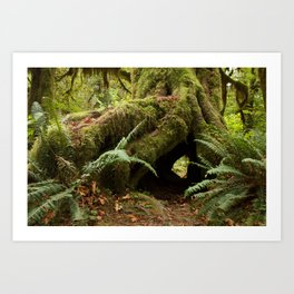 Hideaway in the Hoh Rainforest Art Print
