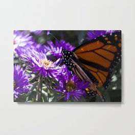 Monarch Butterfly 5 Metal Print