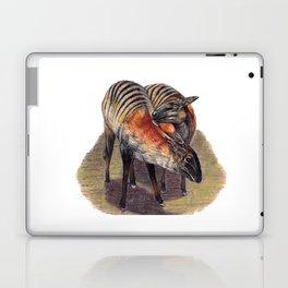 Zebra Duikers Laptop & iPad Skin