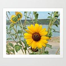 Grabbing some sun Art Print