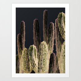 Cactus at Night Art Print