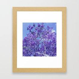 Purple Jacaranda Framed Art Print